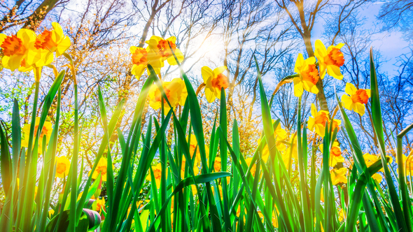 Spring Background. Spring Flowers. Beauty natural background